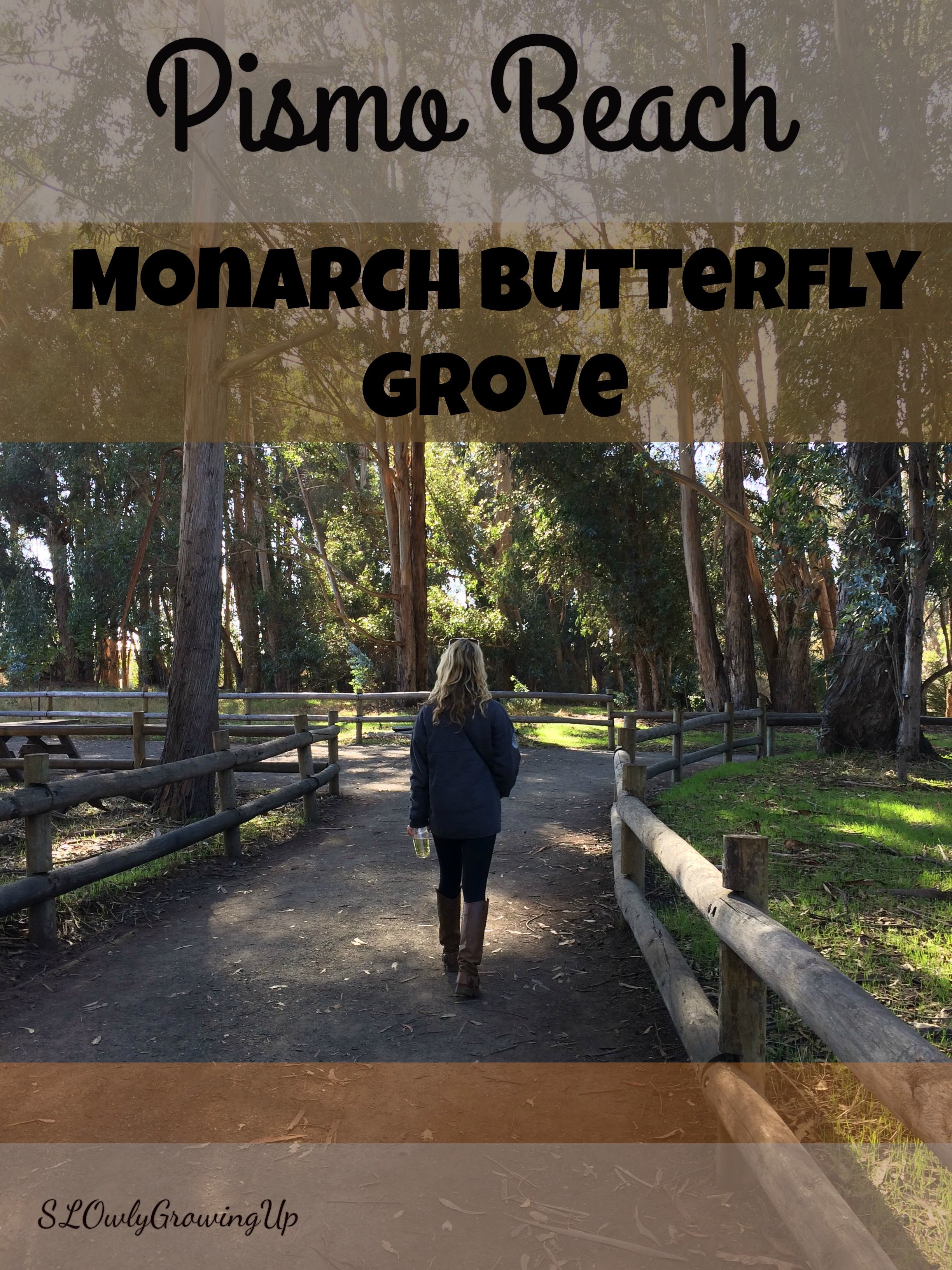 PismoButterflygrove